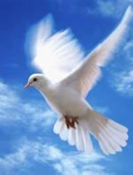 dove_flying.jpg